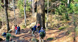 Awaken The Explorer In You With A Hike In Alabama's William B. Bankhead National Forest
