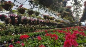 The Largest Garden Center In Pennsylvania, Quality Gardens, Is Like A Nature Lover's Amusement Park