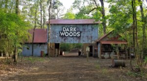 You Can Now Dig For Fossils At Dark Woods Adventure Park In Louisiana