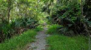 The Mandalay Nature Trail Near New Orleans Is A Brief But Beautiful Walk Through The Wetlands