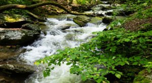 Cross A Flowing Creek On This Scenic Trail At Climbers Run Nature Preserve In Pennsylvania
