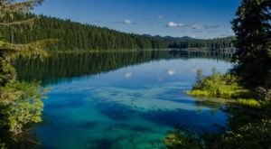 A 3,000-Year-Old Forest Lies Beneath The Surface Of Clear Lake In Oregon