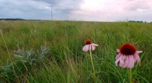 Visit One Of Minnesota's Last Remaining Tallgrass Prairies At Bluestem Prairie Preserve