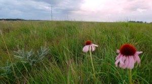 Visit One Of Minnesota's Last Remaining Tallgrass Prairies At Bluestem Prairie Preserve