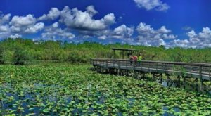 Under 2 Miles Long, Anhinga Trail Is A Totally Kid-Friendly Hike In Florida