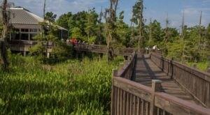 Take A Boardwalk Stroll Through Blue Elbow Swamp At The Texas Travel Information Center