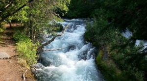 Watch The Alaska Salmon Spawn On The Easy Russian River Falls Trail