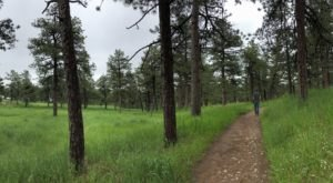 Under 1 Mile Long, Colorow Mountain Forest Loop Is A Totally Kid-Friendly Hike In Colorado