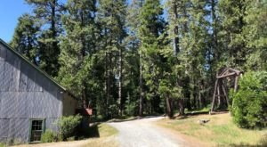 The Hardrock Trail Leads You Past Relics From The Gold Rush In Northern California