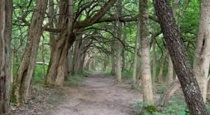 With A Tunnel Of Trees, Sugarcreek Metro Park Might Just Be One Of The Most Impressive Places In All Of Ohio
