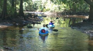 Take This Delta Wildlife Kayak Tour In Alabama For An Unforgettable Summer Adventure