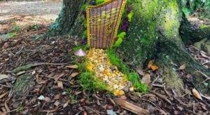 Enjoy A Magical Garden Experience Finding The Enchanted Fairy Doors At Leu Gardens In Florida
