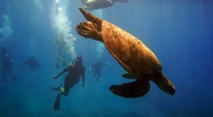 Explore The Underwater World With A Snuba Tour From Aqua Adventures In Hawaii