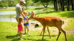 Mingle With Wildlife At Fawn-Doe-Rosa In Wisconsin