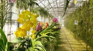 Visit The Stunning R.F. Orchids, The Oldest & Most Prestigious Orchid Farm In South Florida