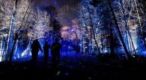 Crystal Bridges' Beloved North Forest Lights Will Be Returning To Arkansas