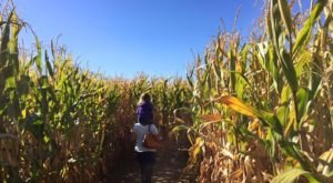 Named One Of The Best Corn Mazes In The Country, Wild Adventure Corn Maze Is a Must-Visit Fall Destination In Idaho