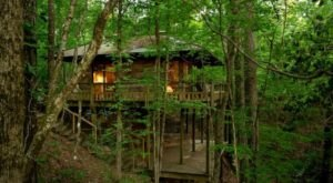 Stay Overnight At These Spectacularly Unconventional Treehouses In Mississippi