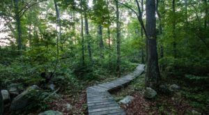 Explore Headwaters Conservation Area In Massachusetts For Beautiful Trails, Stunning Views, And So Much More