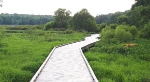 Huntley Meadows Park Is An Oasis Of Boardwalk Trails, Marshy Landscapes, And Wildlife Hiding In Virginia