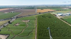 Named One Of The Best Corn Mazes In The Country, Cool Patch Corn Maze Is a Must-Visit Fall Destination In Northern California