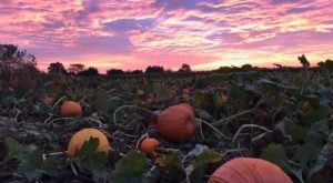Johnson's Corner Farm Might Just Be The Most Fun-Filled Fall Farm In All Of New Jersey