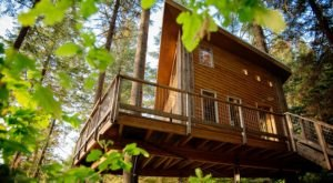 Zip Through The Trees And Enjoy A Treehouse Lunch With Timberline Adventures In Idaho