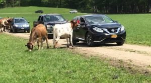 You Don't Even Have To Leave Your Car At Hidden Valley Animal Adventure A Unique Safari Experience In New York
