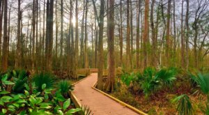 You'll Be Hooked After A Day Spent Exploring These 6 Hidden Trails In Louisiana