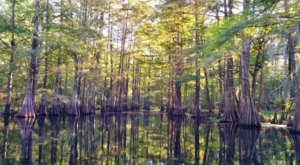 Get Lost In The Sights And Sounds Of The Spring Bayou Wildlife Management Area In Louisiana