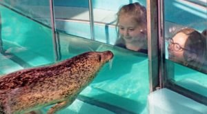 Get An Up-Close View Of Seals And Sea Turtles At The Maritime Aquarium In Connecticut