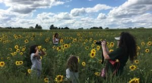 Get Lost Among The Sunflower Fields When You Visit The Country Mill In Michigan