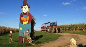 Welcome Autumn With A Visit To Trax Farms Harvest Days Near Pittsburgh