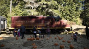 Journey Through The Redwoods To A Secluded Pumpkin Patch On The Pumpkin Express Train In Northern California
