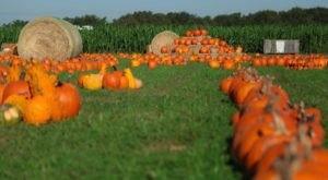Mark Your Calendar For The Fall Festival At Barton Hill Farms In Texas