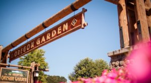 Enjoy Tunes And Tastings At The Oregon Garden This Summer