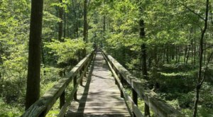 Big Hill Pond State Park In Tennessee Is So Well-Hidden, It Feels Like One Of The State's Best Kept Secrets