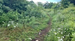 The Passamaquoddy Trail In Shenandoah National Park Is A Beautiful Hike For Wildflower Lovers