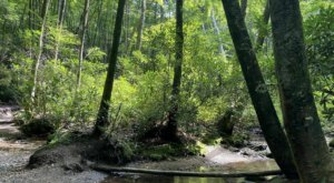 A 2-Mile Hiking Trail In North Carolina, Green Knob Loop Is Full Of Babbling Brooks