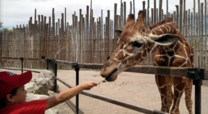 New Mexico's Most Renowned Zoo, ABQ BioPark, Finally Reopened And We Can't Wait To Visit