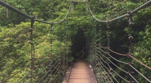 Naturaland Trust Trail Is A Challenging Hike In South Carolina That Will Make Your Stomach Drop