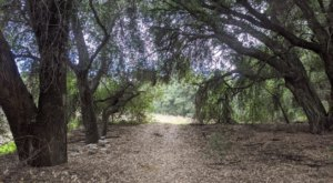 You'll Forget You're In Southern California On Wildwood Canyon Trail, An Easy Hike That Leads Through An Enchanted Forest