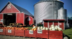 Gust Brothers Might Just Be The Most Fun-Filled Pumpkin Farm In All Of Michigan