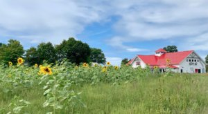 Visit The Stunning Applecrest Farms, The Oldest & Most Prestigious Apple Farm In New Hampshire