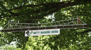 There's A Bridge Dedicated Solely To Squirrels In Washington (And It's Adorable)