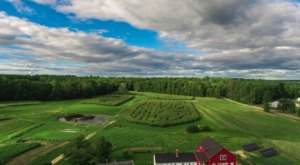 One Of The Best Corn Mazes In The Country, Coppal House Farm's Corn Maze Is a Must-Visit Fall Destination In New Hampshire