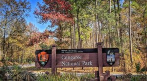 One Of South Carolina's Most Incredible Natural Wonders, Congaree National Park, Holds 15 World Records