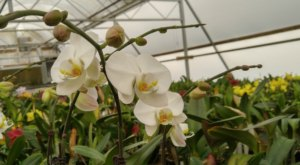 Visit The Stunning Owen's Orchids, The Oldest & Most Prestigious Orchid Farm In North Carolina