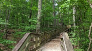 Hemlock Bluffs Nature Preserve In North Carolina Is So Hidden Most Locals Don't Even Know About It