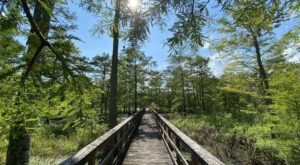 Dungannon Plantation Heritage Preserve In South Carolina Is So Hidden Most Locals Don't Even Know About It